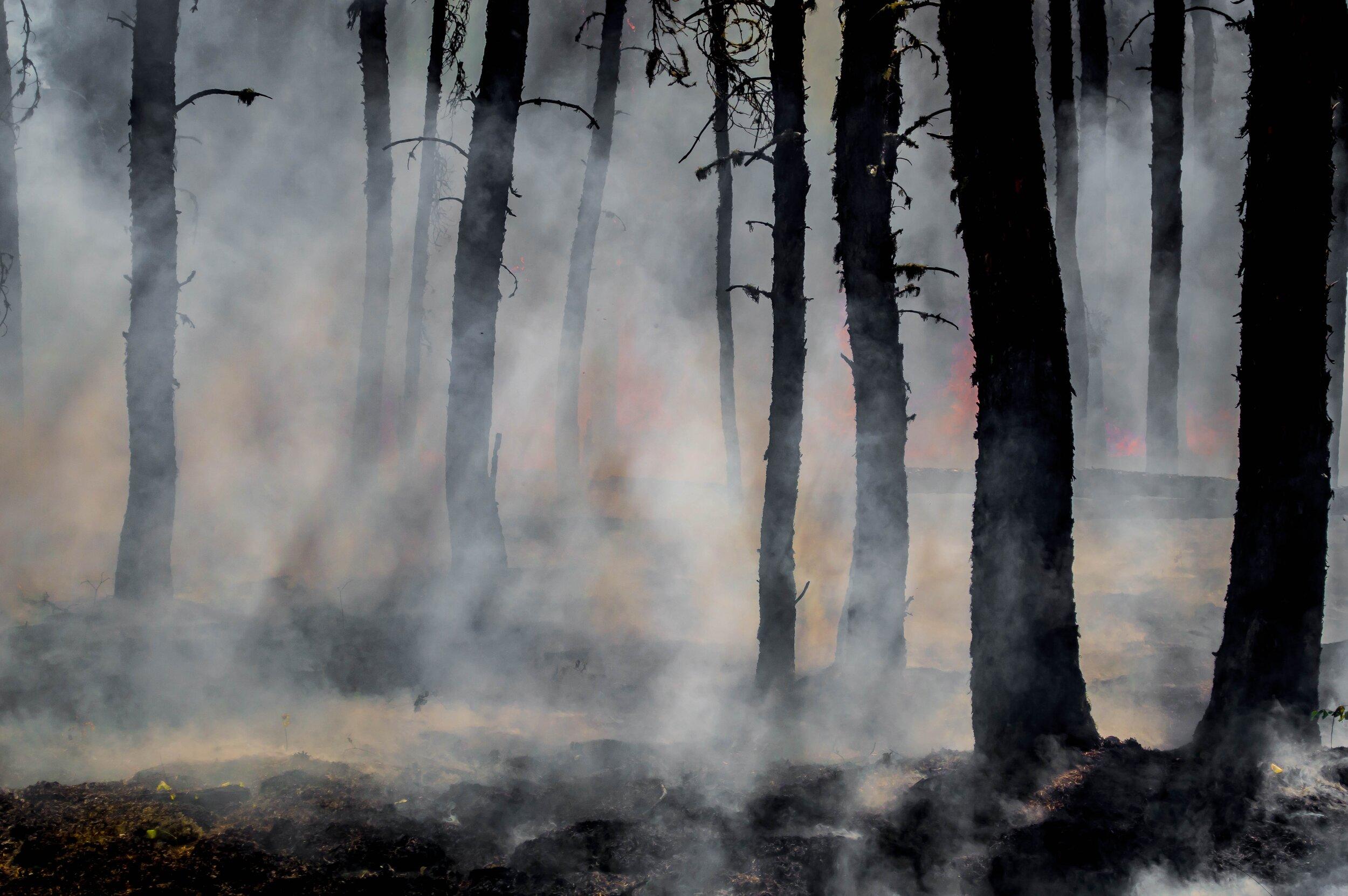 Threats to parks include fire. Photo: J. Francis via Unsplash.