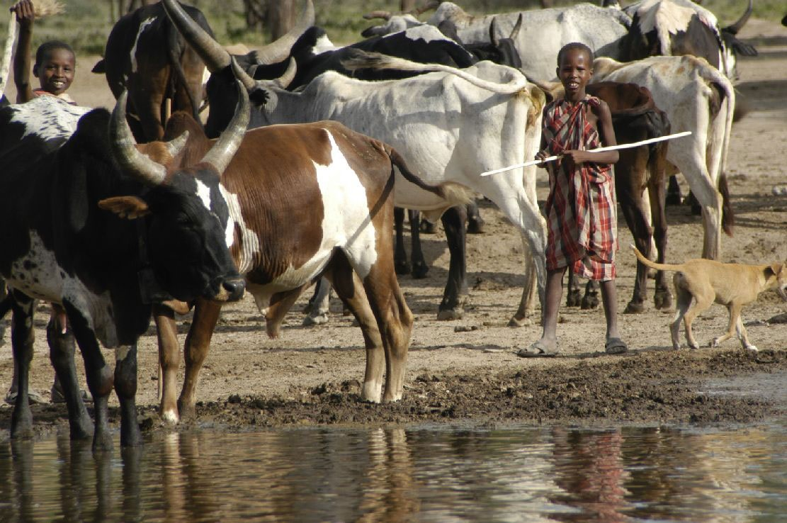 masai children at watering hole with water supplied by tanzanite foundation.jpg
