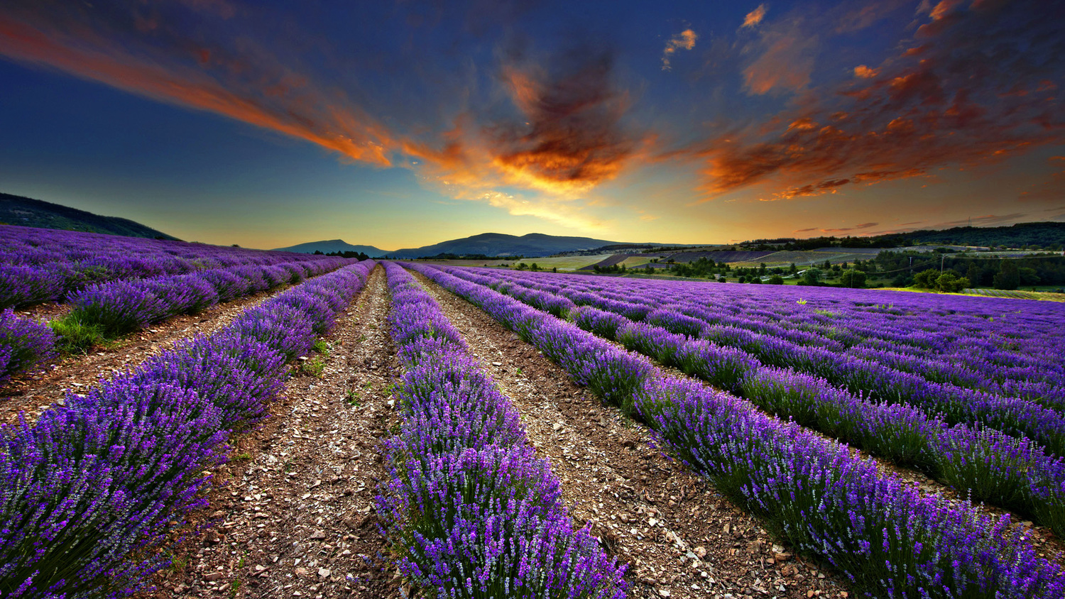 Sunset over a lavender field in Oregon. Does it get more beautiful than that?