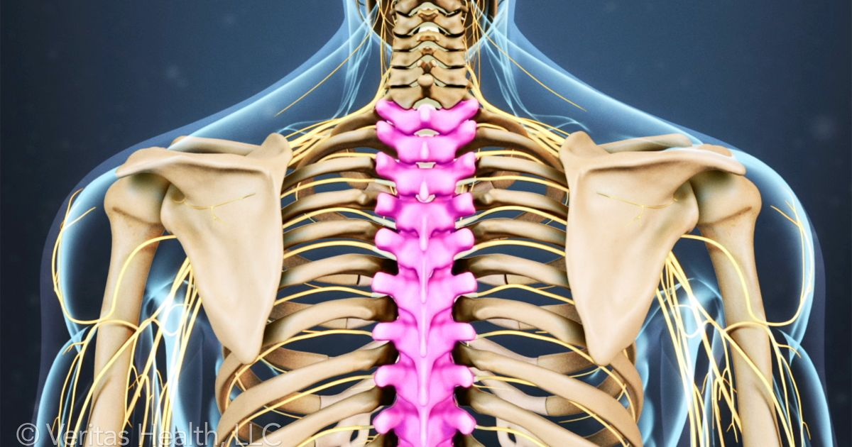I love that you can see the nerves, (little yellow noodle-y things)! These are just the largest nerves, there are many more in this area that aren't pictured. This image is presented here courtesy of  https://www.spine-health.com .