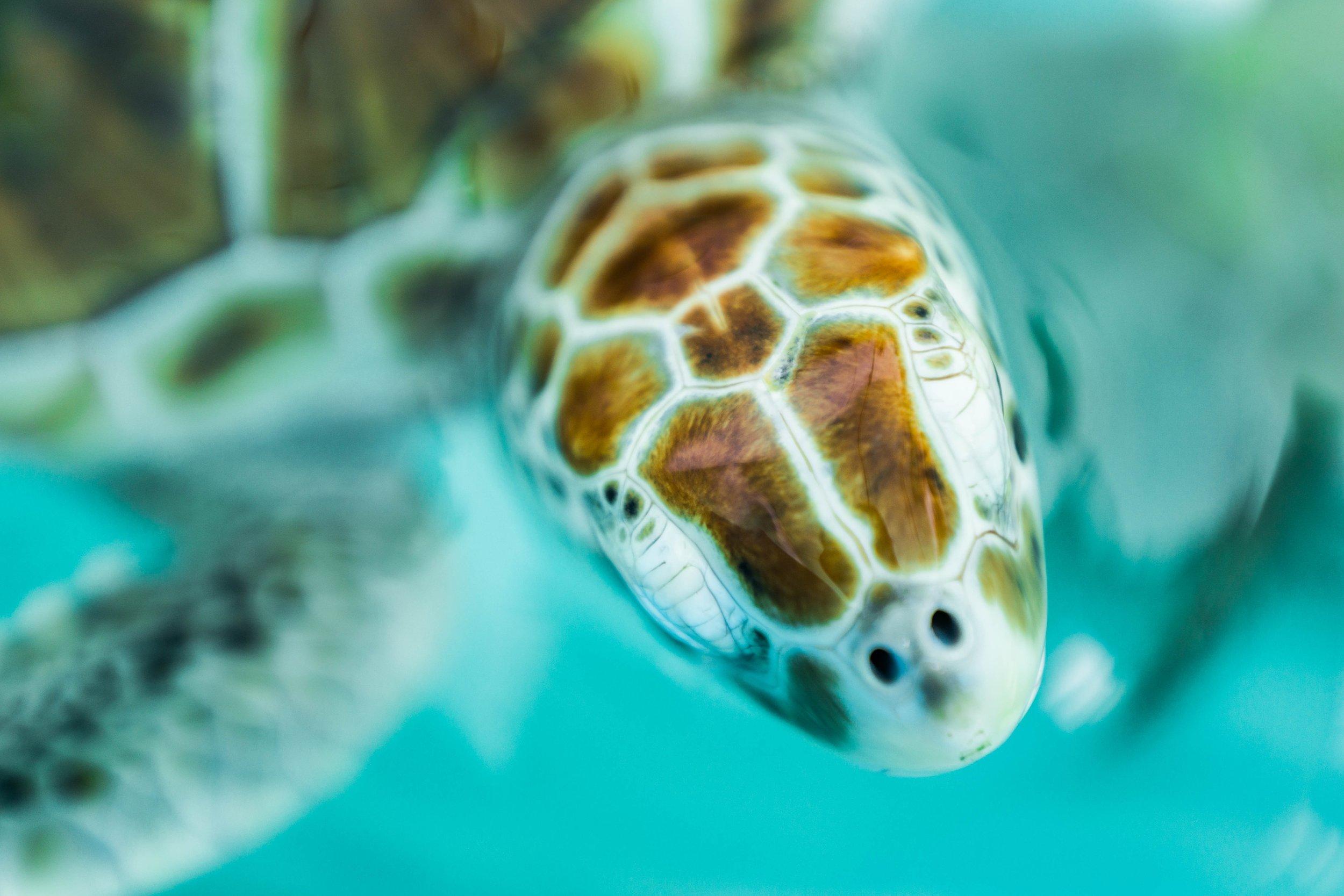 NINGALOO TURTLE PROGRAM -
