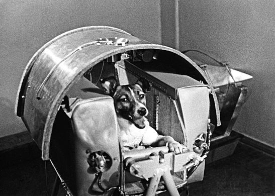 LAIKA - On the 3rd of November 1957 the Soviet Union launched the first ever living creature to orbit earth.Laika was a stray, found wondering the streets of Moscow. She was promoted to cosmonaut because of her small size and calm demeanour. At 5.30am from Kazakhstan the Sputnik 2 carrying Laika blasted off. For Laika this was a one way trip as there was no way of bringing her back home to earth. Sadly only a few hours into trip no life signs where being received on board Sputnik 2. It is believed that Laika died from over heating and stress.