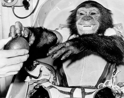 HAM - On the 31st of January 1961 NASA launched the first ever chimpanzee into space.The chimpanzee known as Ham – an acronym for the laboratory that prepared him for his mission, the Holloman Aerospace Medical Centre, successfully completed a suborbital flight MR-2 as part of Project Mercury.Ham's flight lasted approximately 16 ½ minutes. He experienced about 6 ½ minutes of weightlessness. Ham's capsule splashed down 130 miles from it's target and Ham was physically unharmed.The mission would be the United States' first step in a major project to eventually put a human astronaut, Alan Shepard, Jr., the first American, into space.
