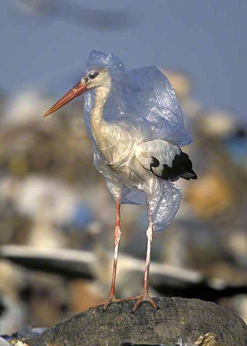 Plastic+Bird.jpg