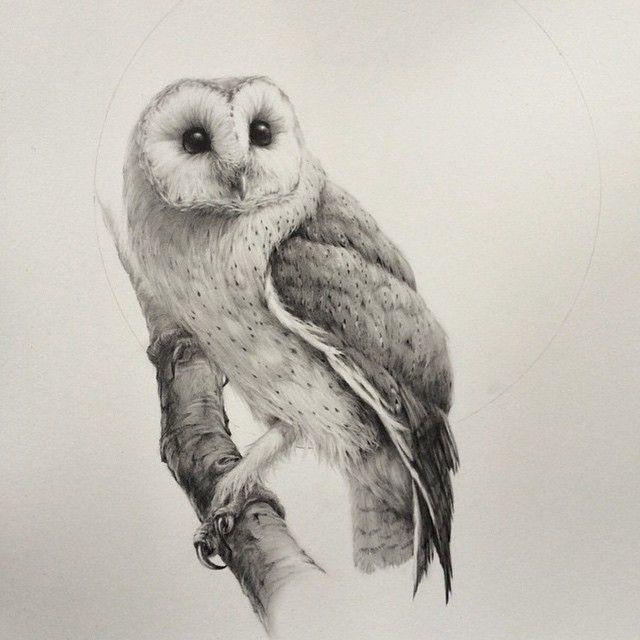 owl drawing.jpeg