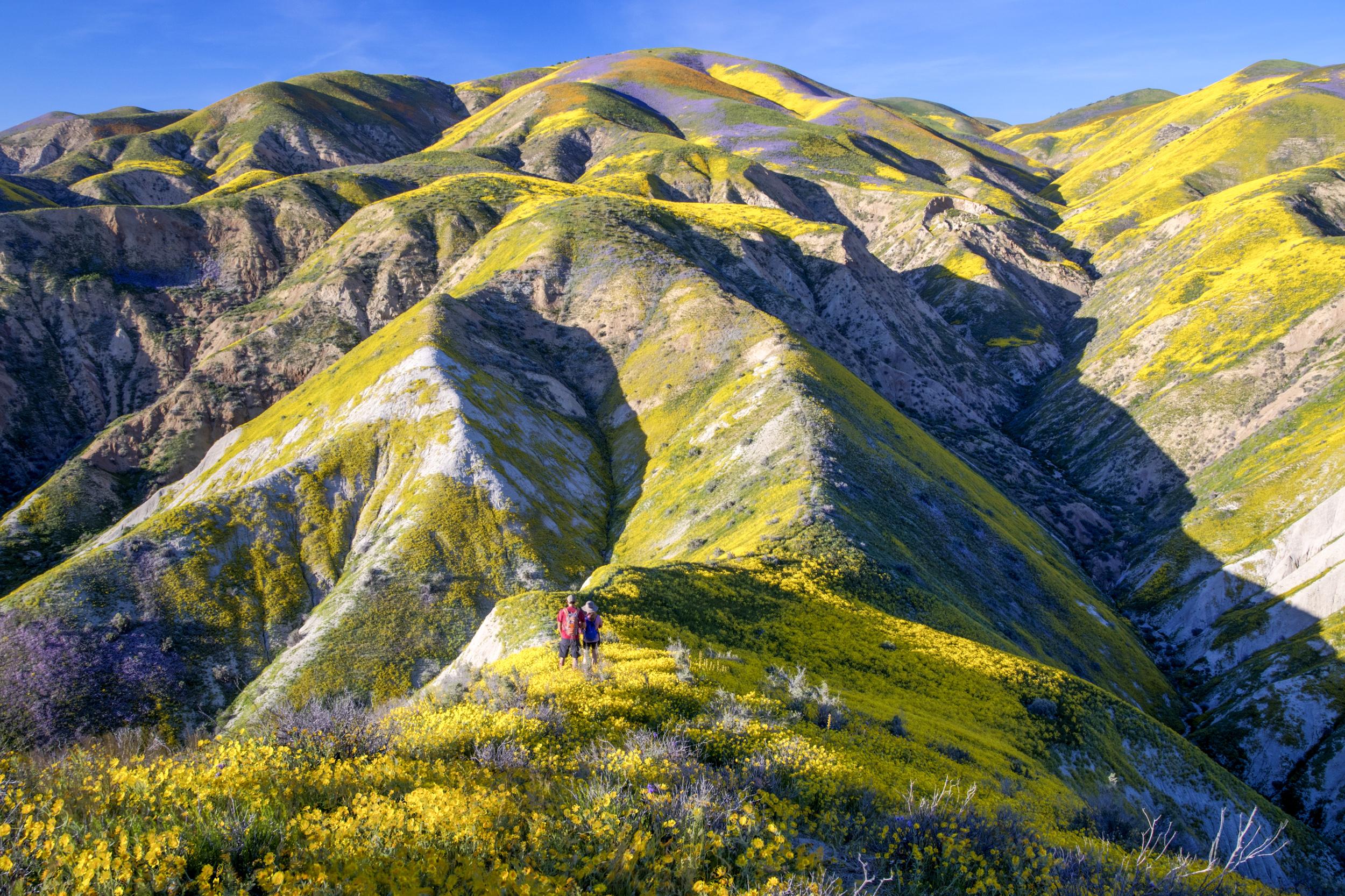 Temblor Range Wildflowers. © Bob Wick, BLM