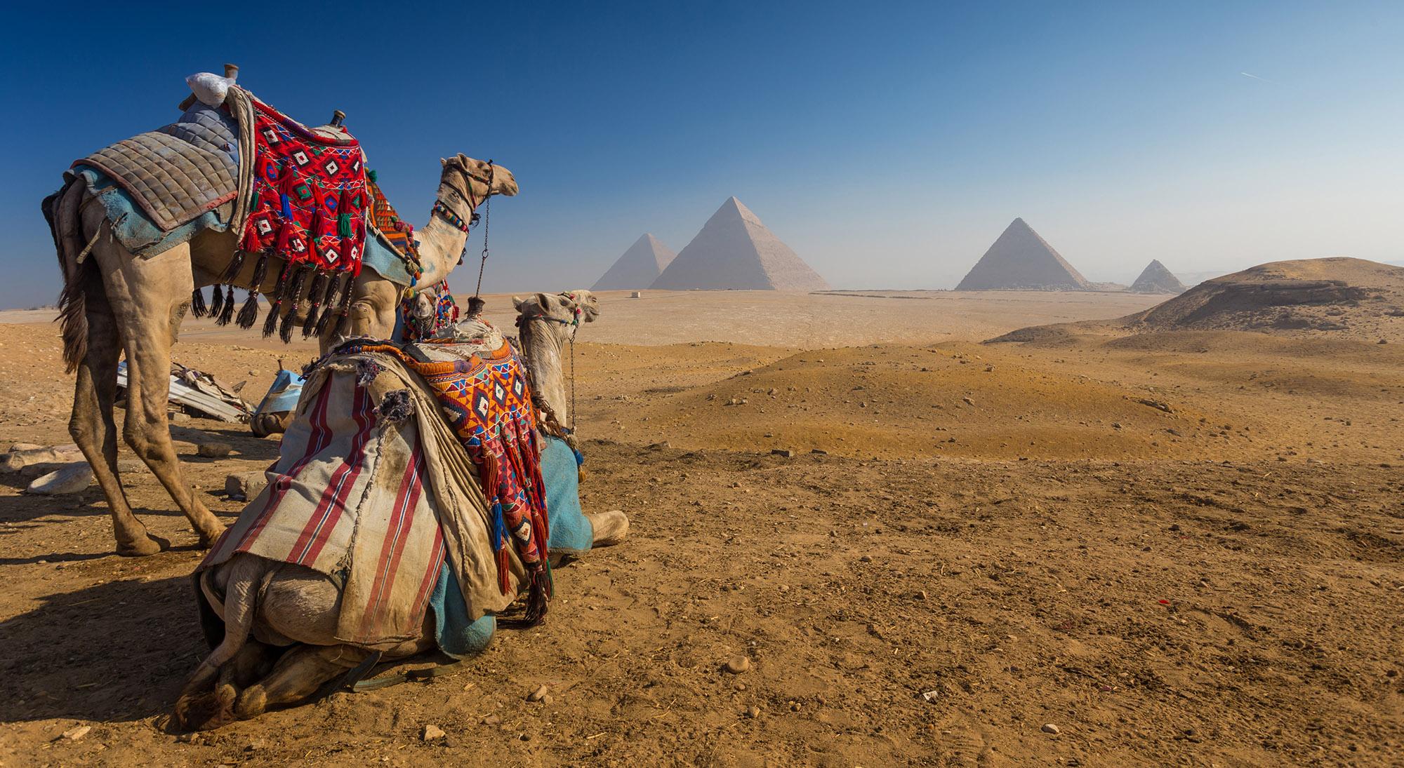 Camels at Pyramids Giza Egypt
