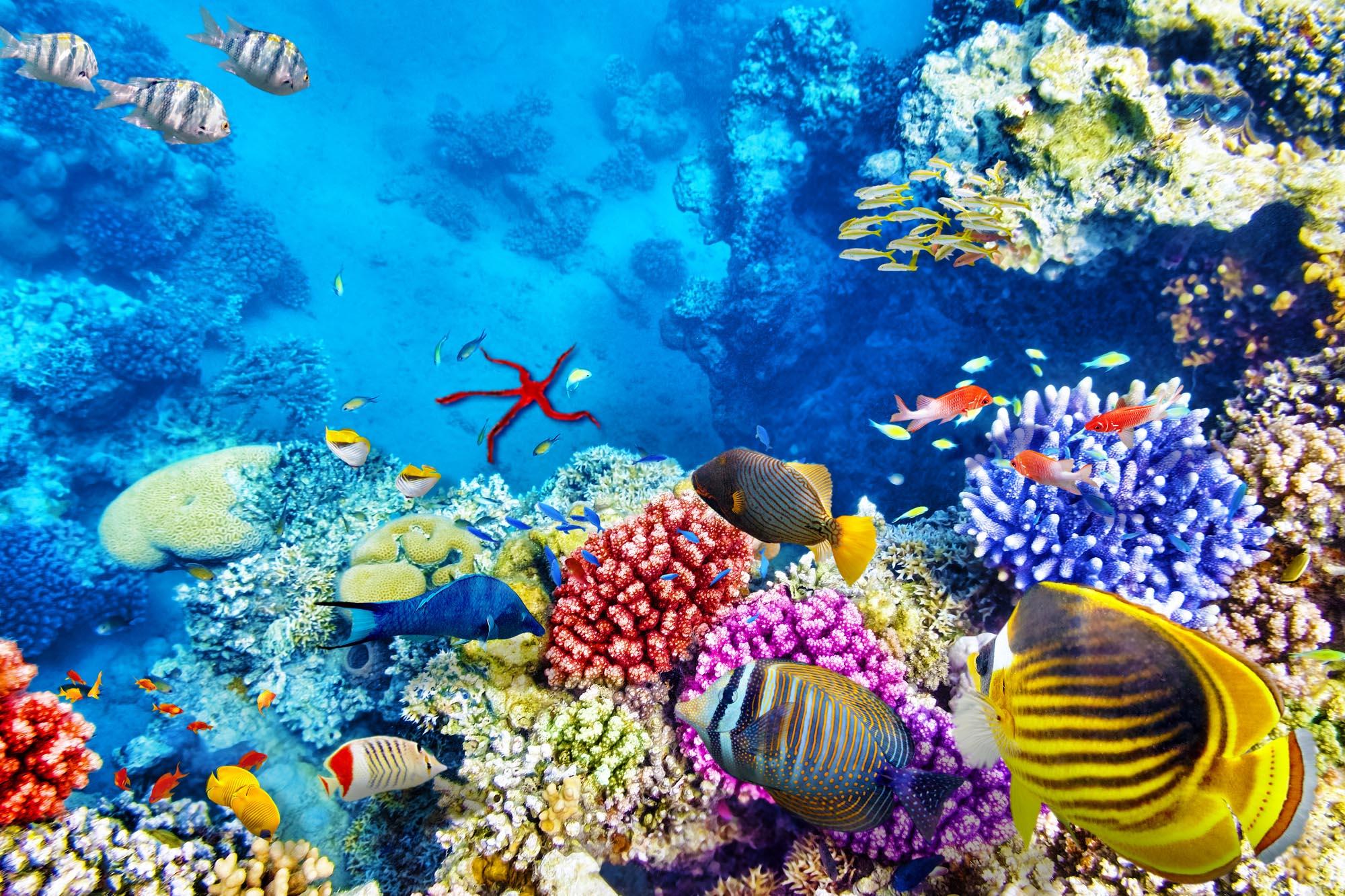 Underwater Life Red Sea Egypt