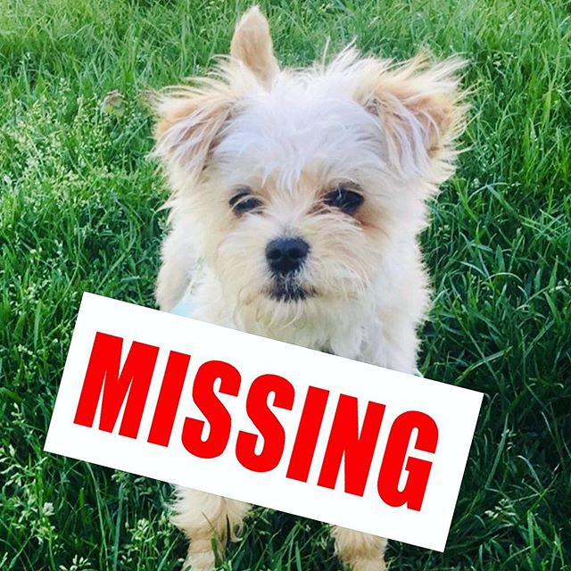 Beloved #Petzbe member, Prince, has gone missing! He was last seen in Clifton, New Jersey. He is a small morkie dog & is completely friendly. His family lives in Prospect Park, NJ. On behalf of Petzbe we are offering a reward for his safe return. Please email hey@petzbe.com with any information! Thank you so much 🙏💖🐾 #newjersey #lostpet #lostdog #newyork #cliftonnewjersey #prospectpark #help #lost #share #reward #nj #morkie