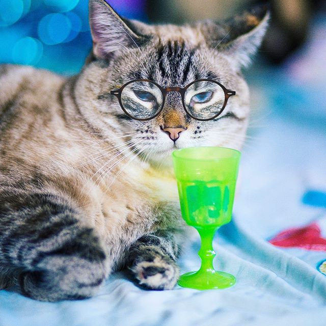 @bellini.the.yogini often times enjoys to 💤nap💤 &🍹pawwwty🍹at the same time because she is an indepurrrdant lady & she does what she wants. 💞🍾 💤 *Sniff* Bellini today on #Petzbe! 🐾📲