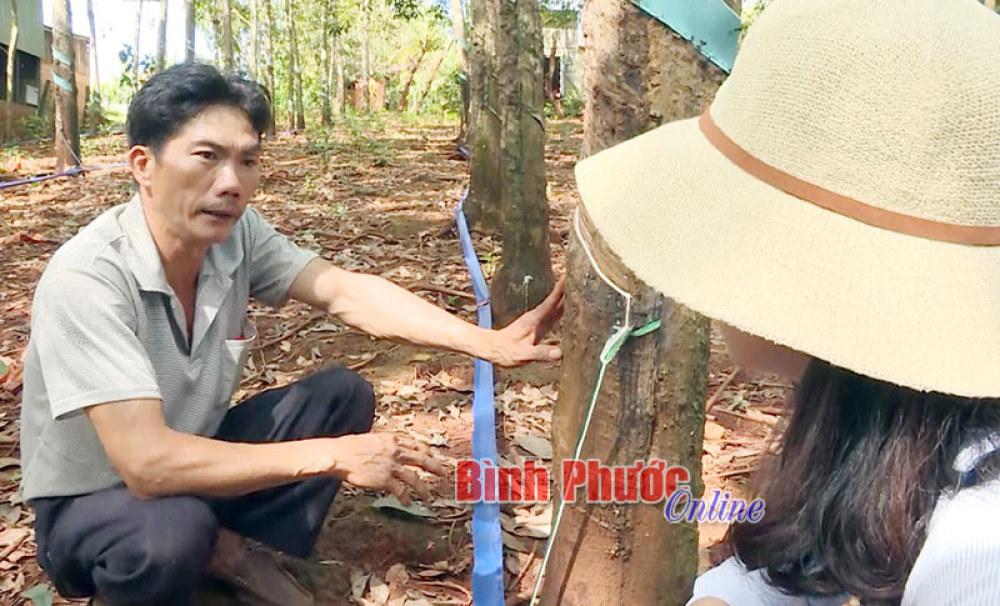 Anh Nguyễn Yên trao đổi với phóng viên về quá trình nghiên cứu và chế tạo thành công hệ thống thu gom mủ tự động