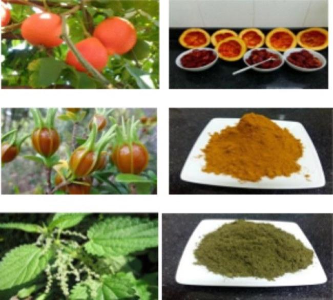 Bộ phẩm màu thực phẩm: Màu đỏ từ quả Gấc, màu vàng từ quả Dành Dành và màu xanh từ lá Gai.