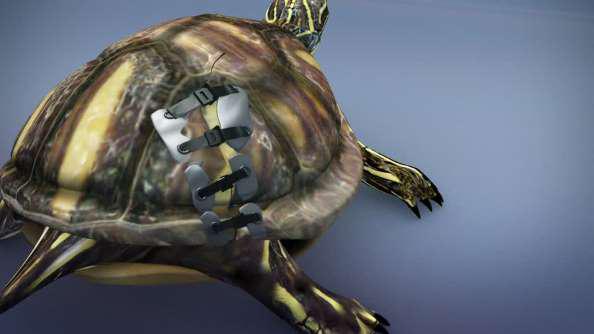 Móc khóa áo ngực được gắn bằng keo vào hai nửa mai bị vỡ, dây rút nhựa được dùng để ép chặt vết nứt trên mai.