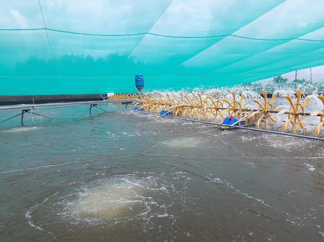 """Kỹ thuật nuôi tôm mới sử dụng bạt HDPE và nhà màng để """"bảo vệ"""" hồ nuôi tôm trước những tác động thời tiết. Ảnh: Hà Thế An."""