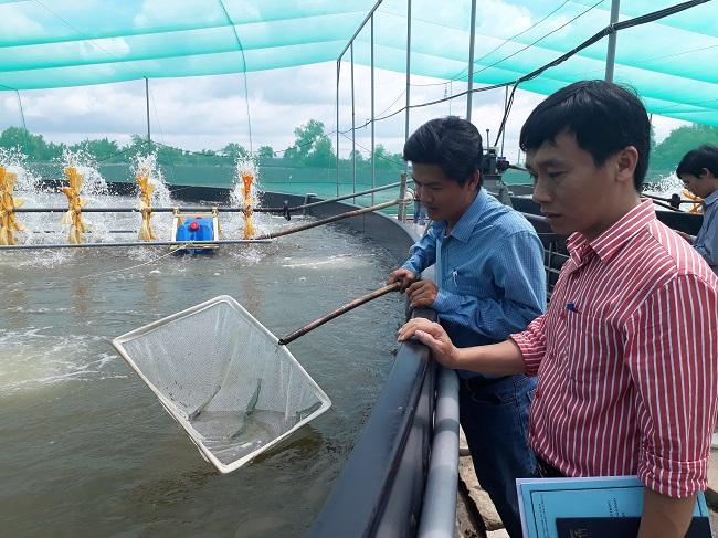 Ông Lê Huy Hoàng, Phó trưởng Phòng quản lý khoa học và công nghệ cơ sở, Sở KH&CN TP.HCM khảo sát hiệu quả của mô hình nuôi tôm kỹ thuật mới do Sở hỗ trợ nông dân thí điểm tại Cần Giờ.