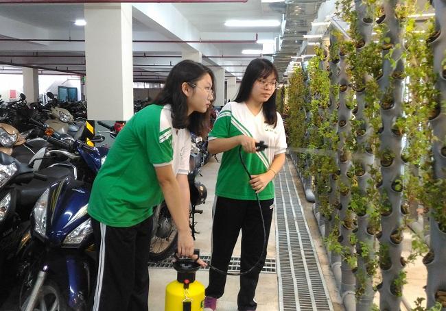 Nhóm học sinh chăm sóc giàn cây khí canh trong hầm để xe. Ảnh: NVCC.