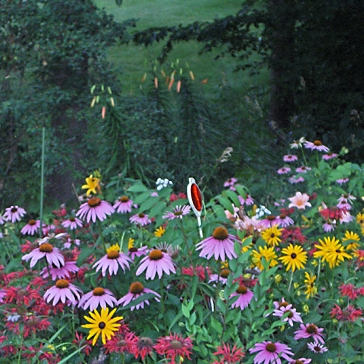Garden Photos -