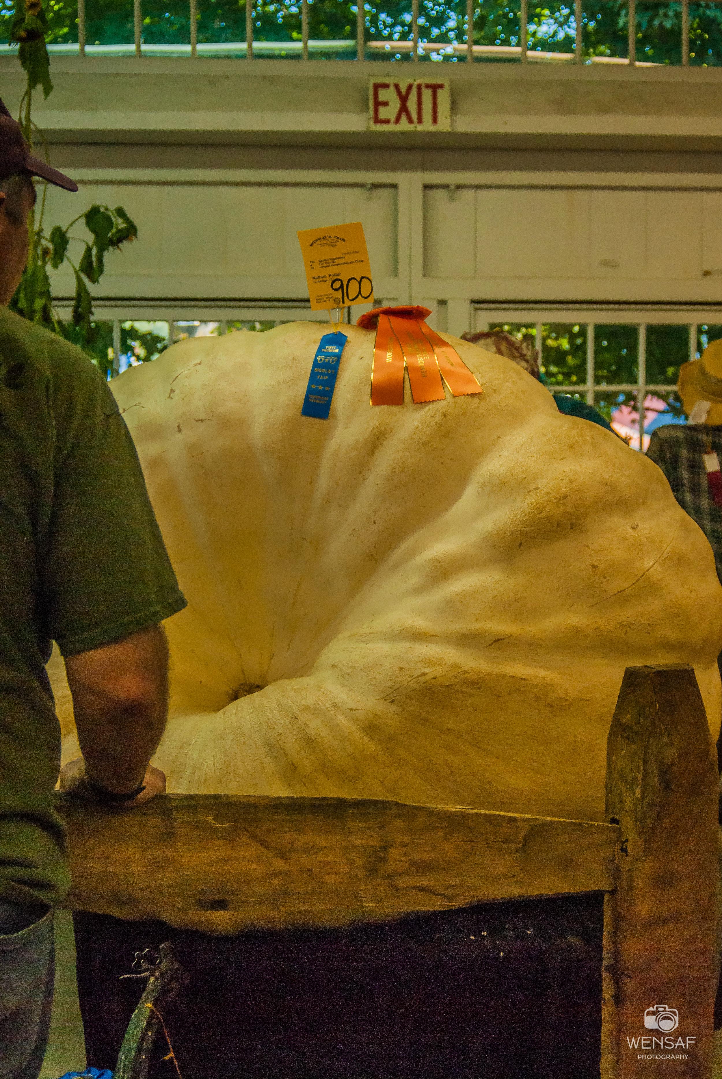 900 lb pumpkin amazed me….but not my kids LOL
