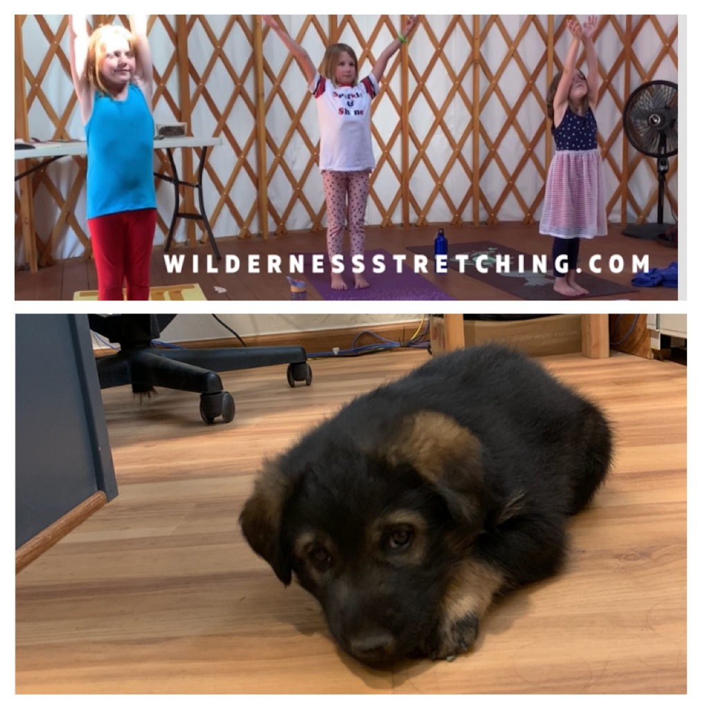 I went again to visit yoga classes taught by my friend, May. May is a driver and presenter at HH.  Puppy visits to the office is one of my favorite perks.