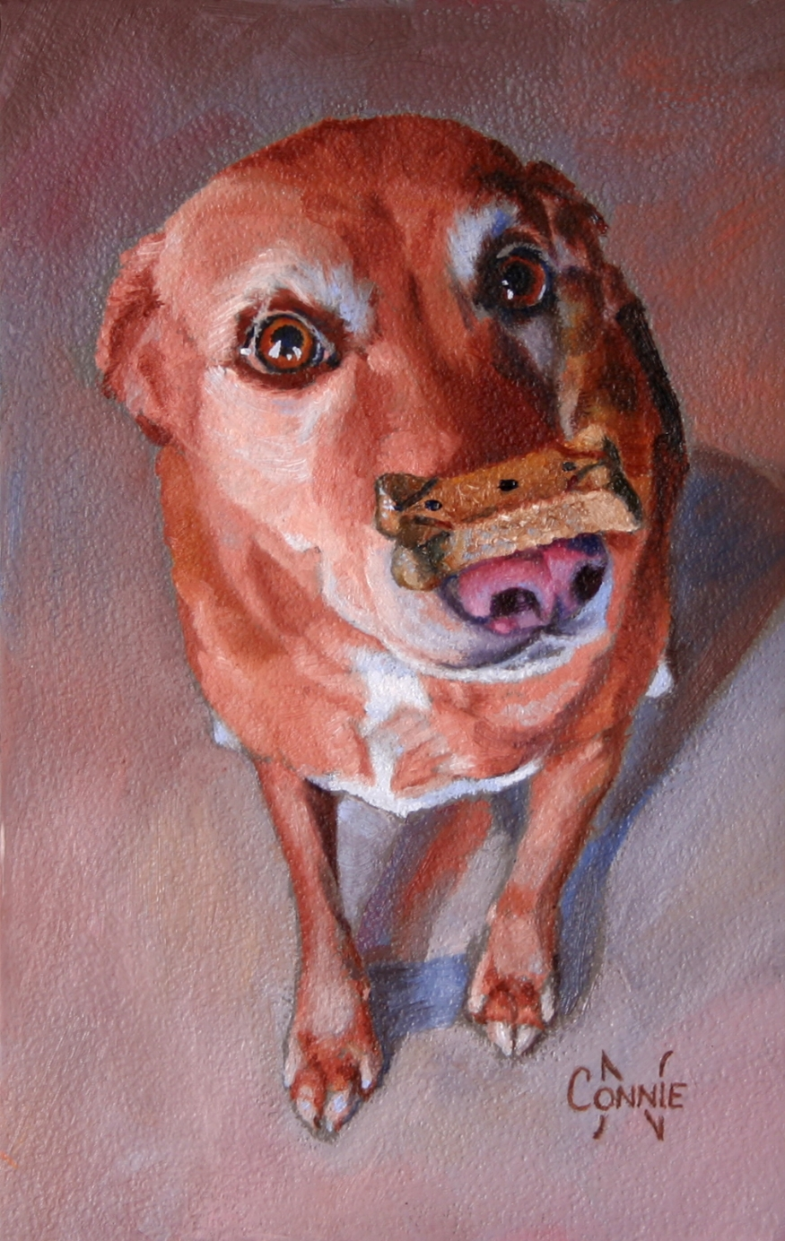 Dog Torture - 8