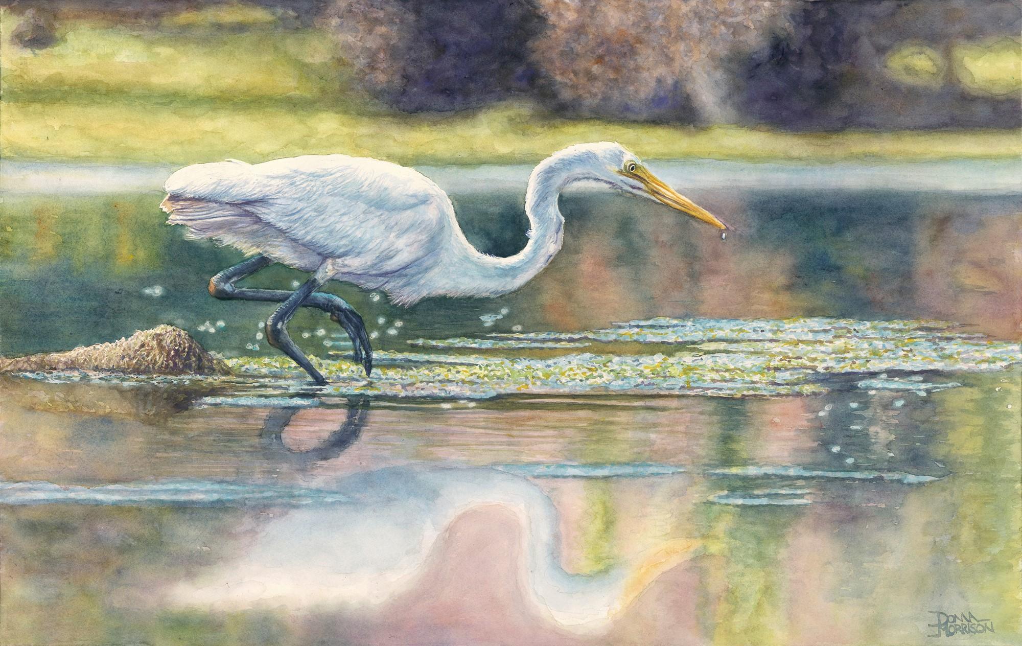 White Egret Prowl by Donna Morrison
