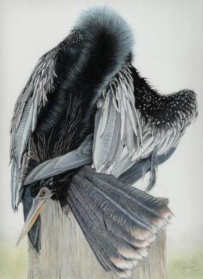 Anhinga Love Knot by John Guiseppi