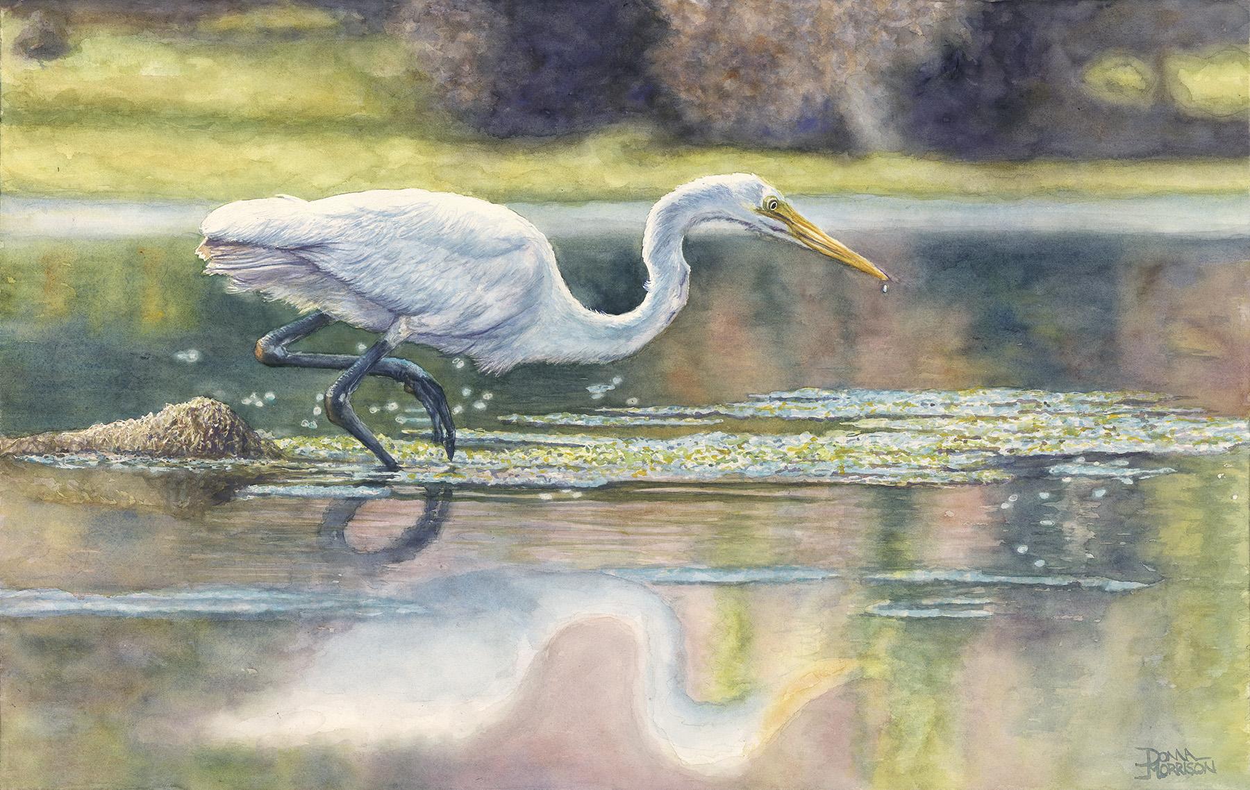 Morrison  3-10-2016 - Egret (Small).jpg