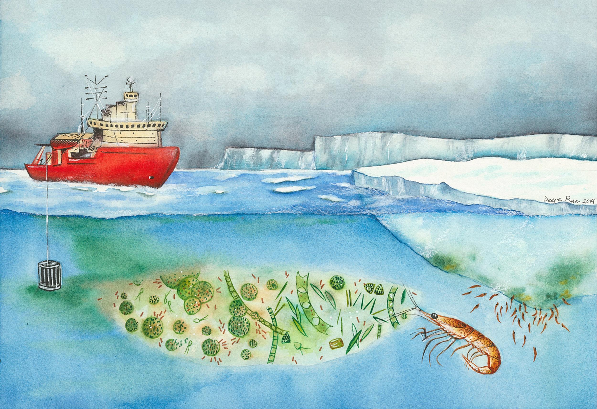 antarctic-seas.jpg