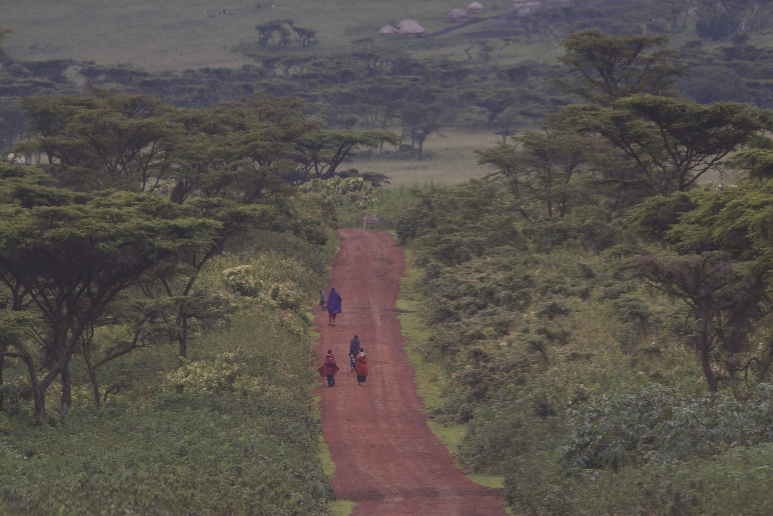 maasai endulen road.jpg