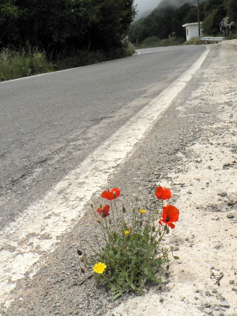 road-emergence.jpg