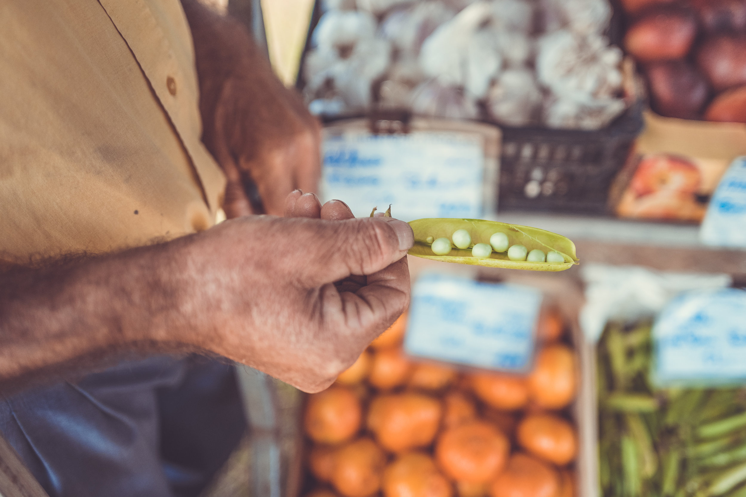 A person holding pea pods with peas still inside.