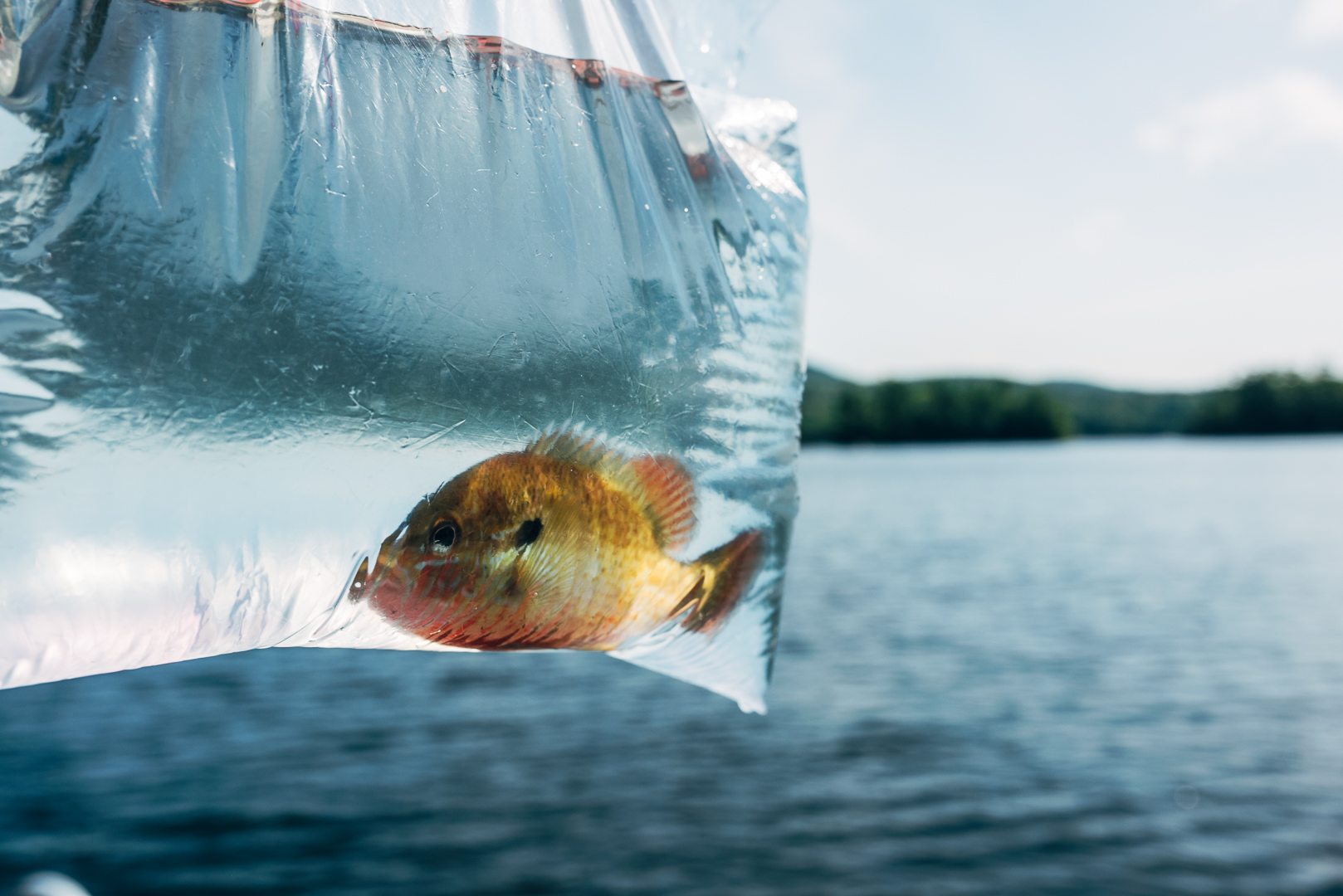 fish-15.jpg
