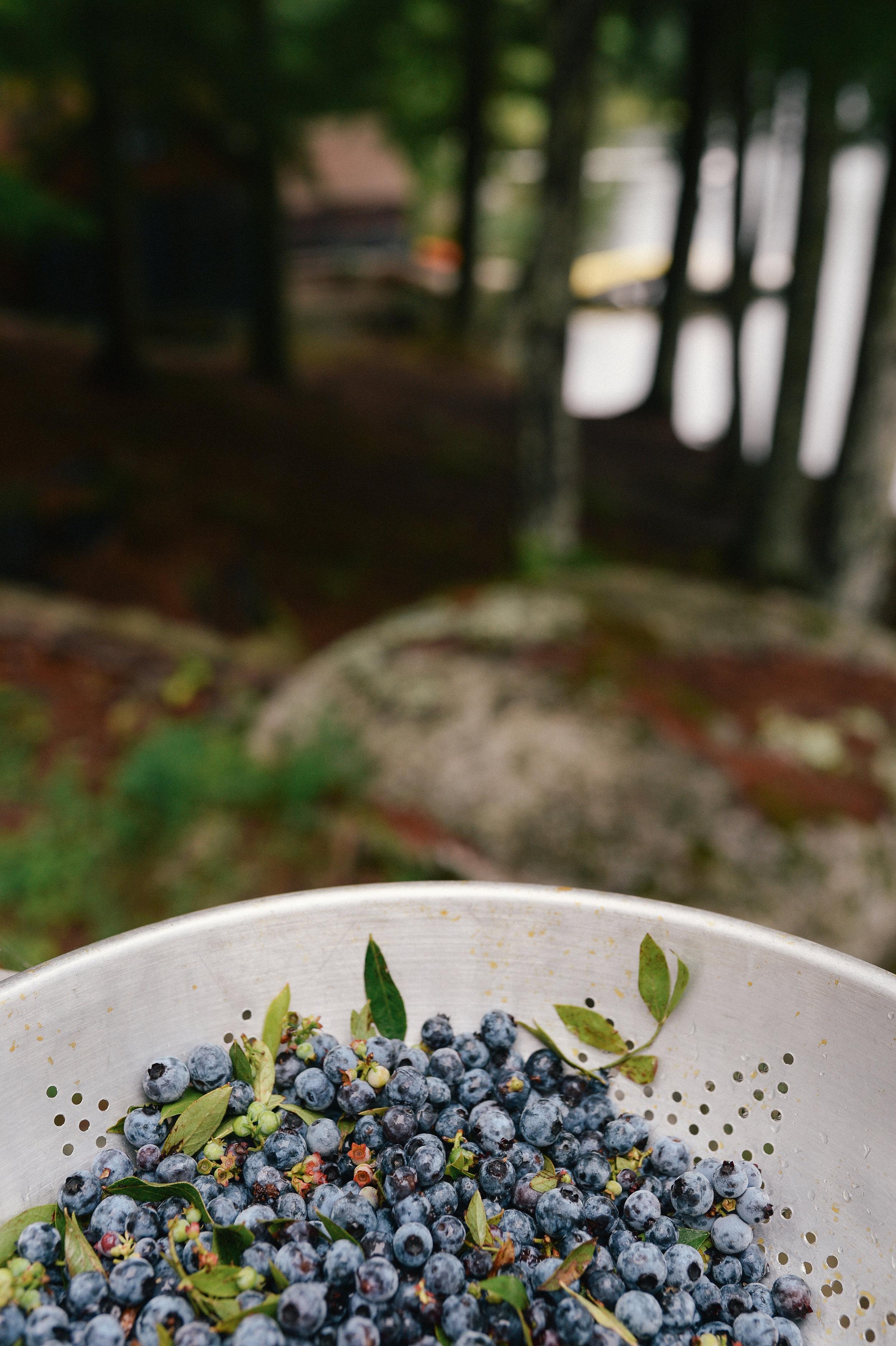 blueberries-5.jpg