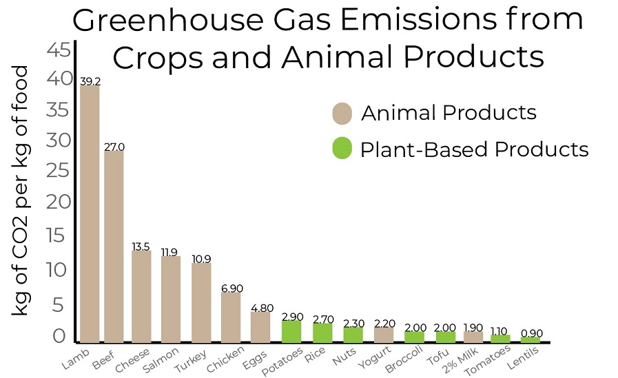 Graphic created by Kayla Guilliams with information adapted from the Environmental Working Group.