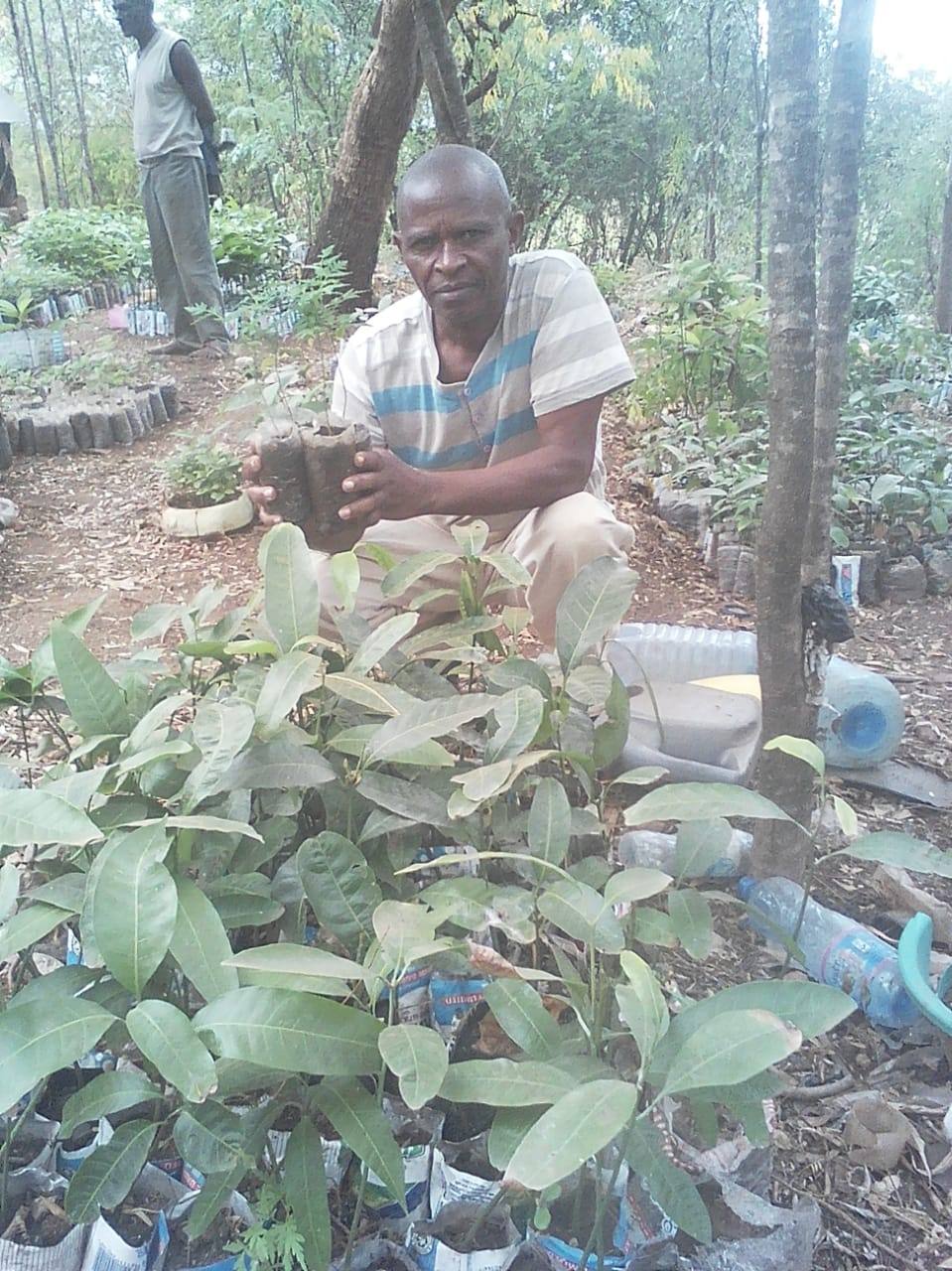 The trees - Mango, Neem and Jacaranda are among the 3 species of trees planted through our partnership with a cooperative of wood artisans in Machakos, Kenya. At the nursery, plastic bottles and bags have been reused for drip-feeding the seedlings before and after transplantation.