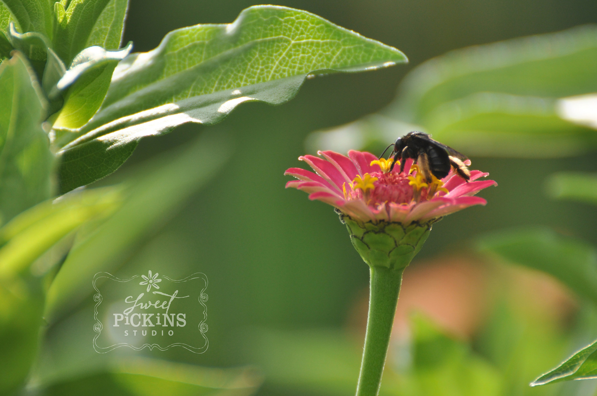 Garden Photography by Sweet Pickins Studio 2018
