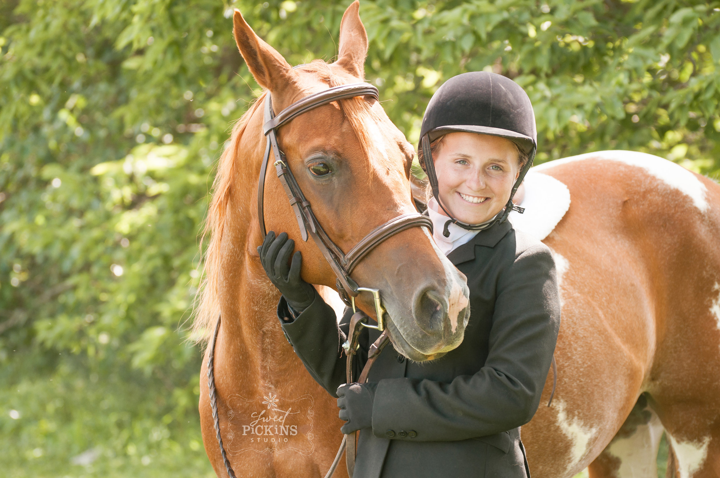 Equestrian Horse Portrait Photography Session   Greentown, IN