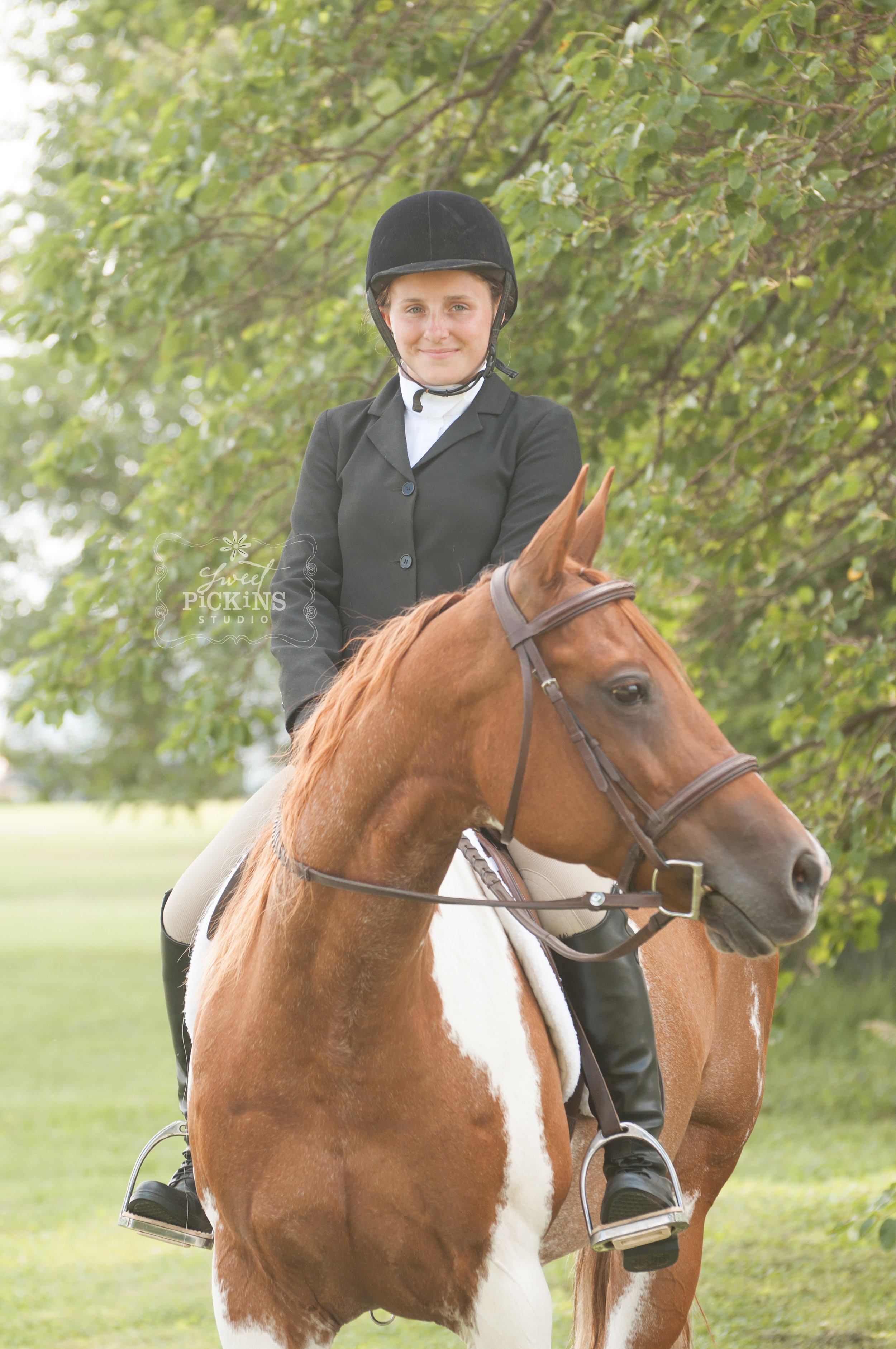 Equestrian Horse Portrait Photography Mini Session at Greentown Open Show