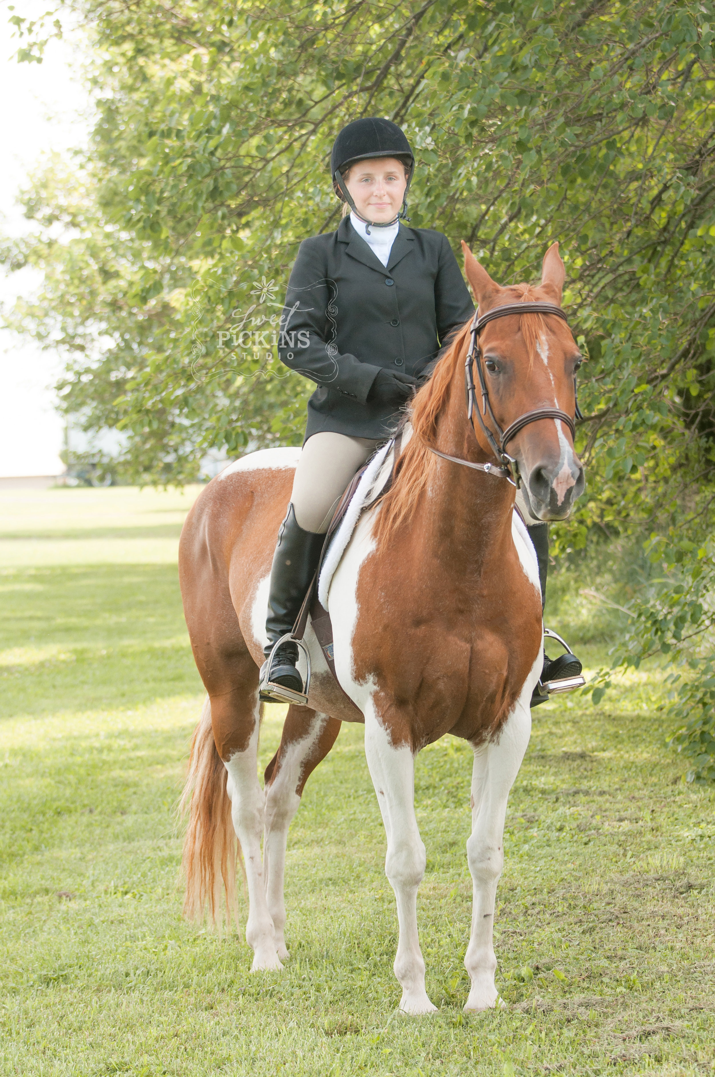 Equine Horse Portrait Photographer   Sweet Pickins Studio