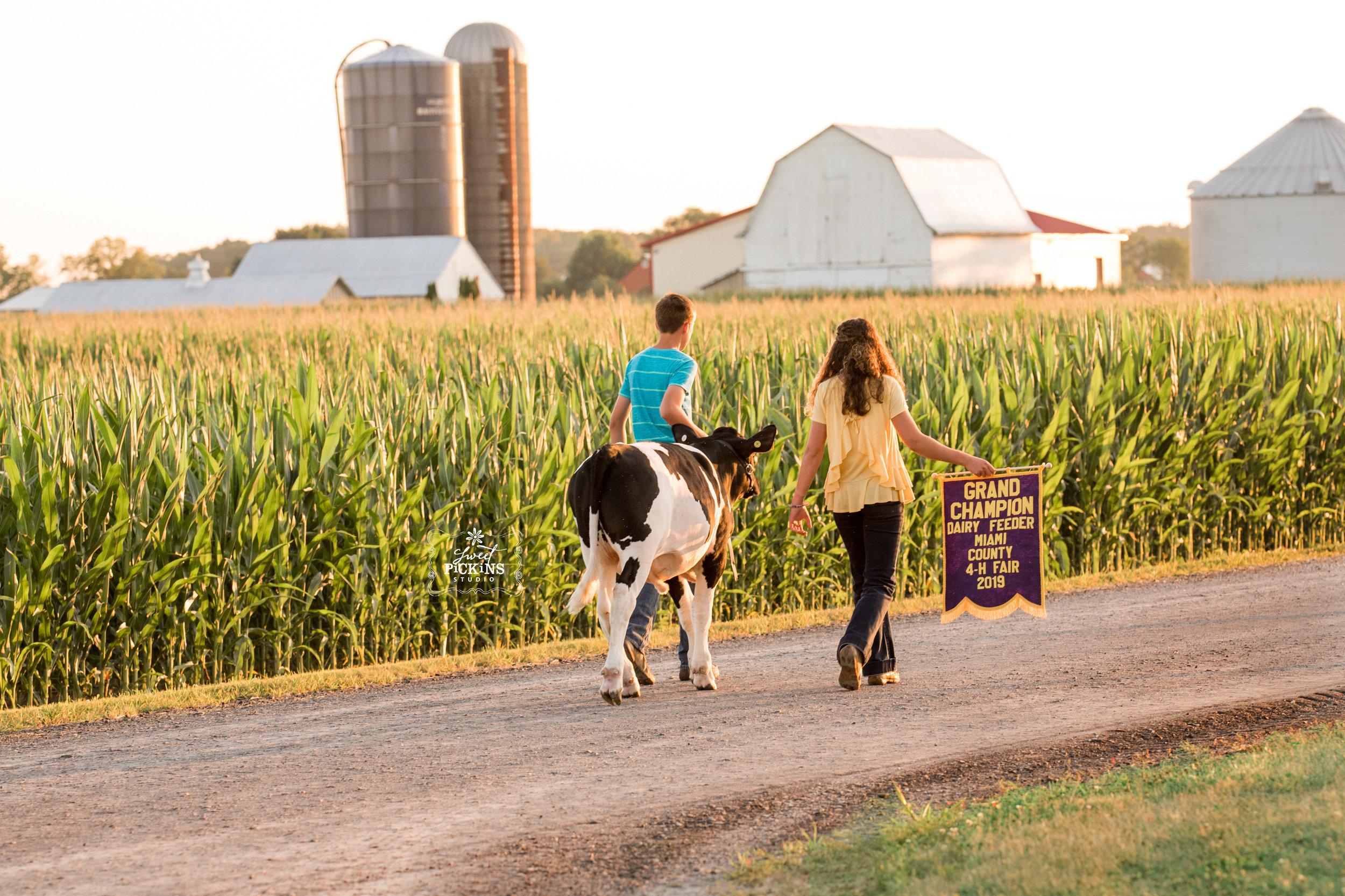 Indiana Farm Kids Walk Dairy Calf