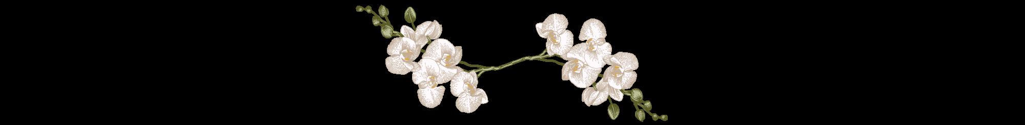 Divider-white-flower.png