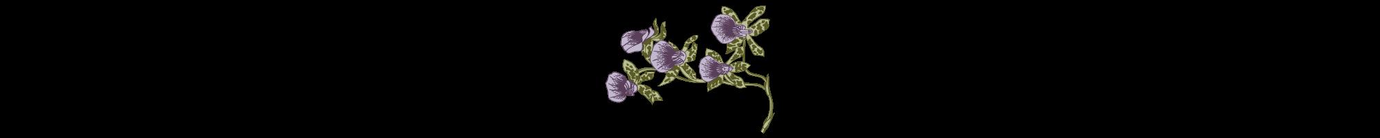 Divider-purple-flower.png