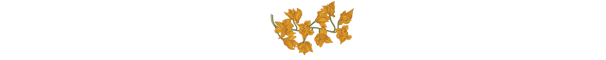 Divider-yellow-flower.png