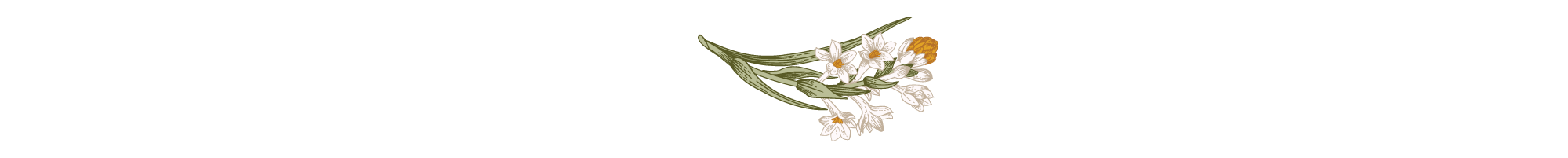 Divider-daisy-flower.png