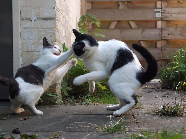 Cat Disagreement.jpg