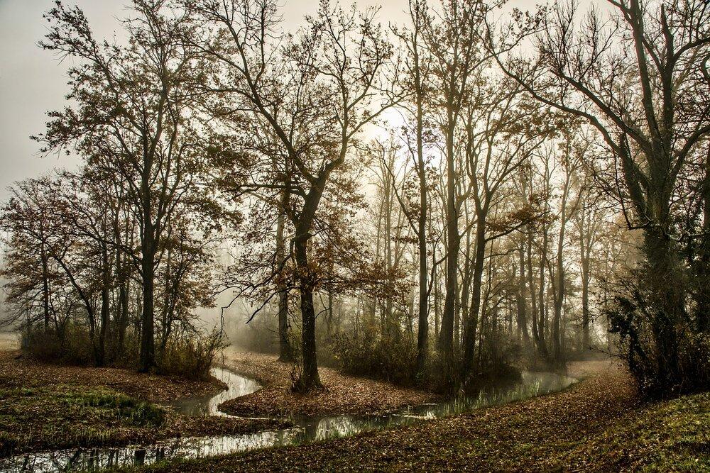 trees-5746604_1280.jpg