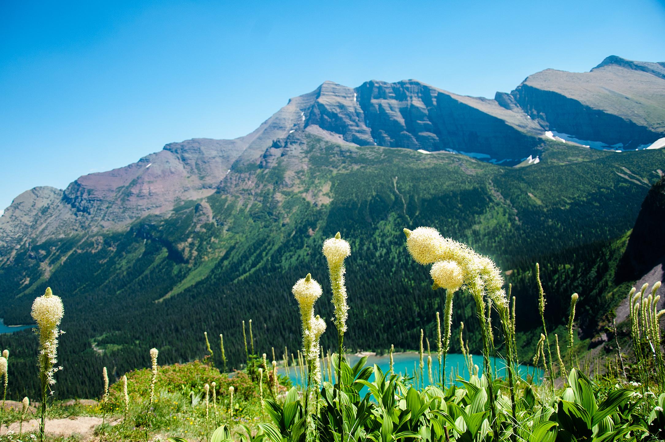 Beargrass over Grinnell Lake, Glacier National Park, MT