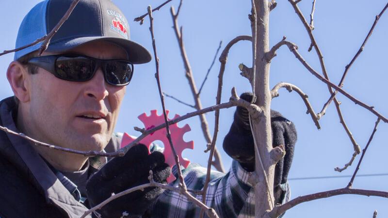 "Jason VanderSluis employs a ""fruit count wheel"" to target fruit counts limb by limb."