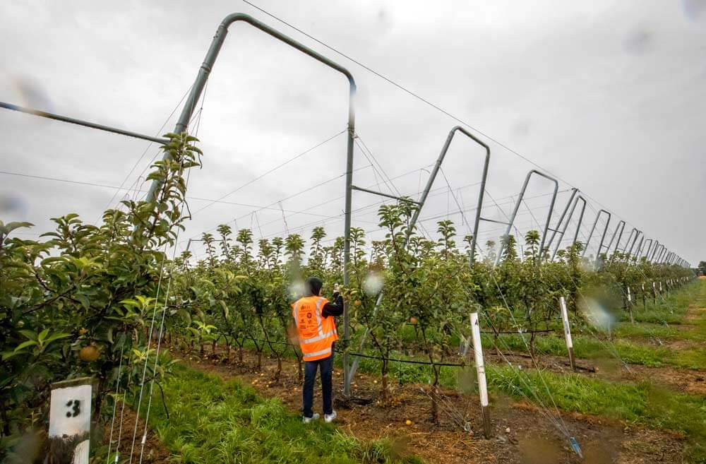 An IFTA study tour attendee takes photos of the steel work at Vailima Orchard during tropical cyclone Gita in the Nelson area of New Zealand in February. Photo by TJ Mullinax,  Good Fruit Grower.