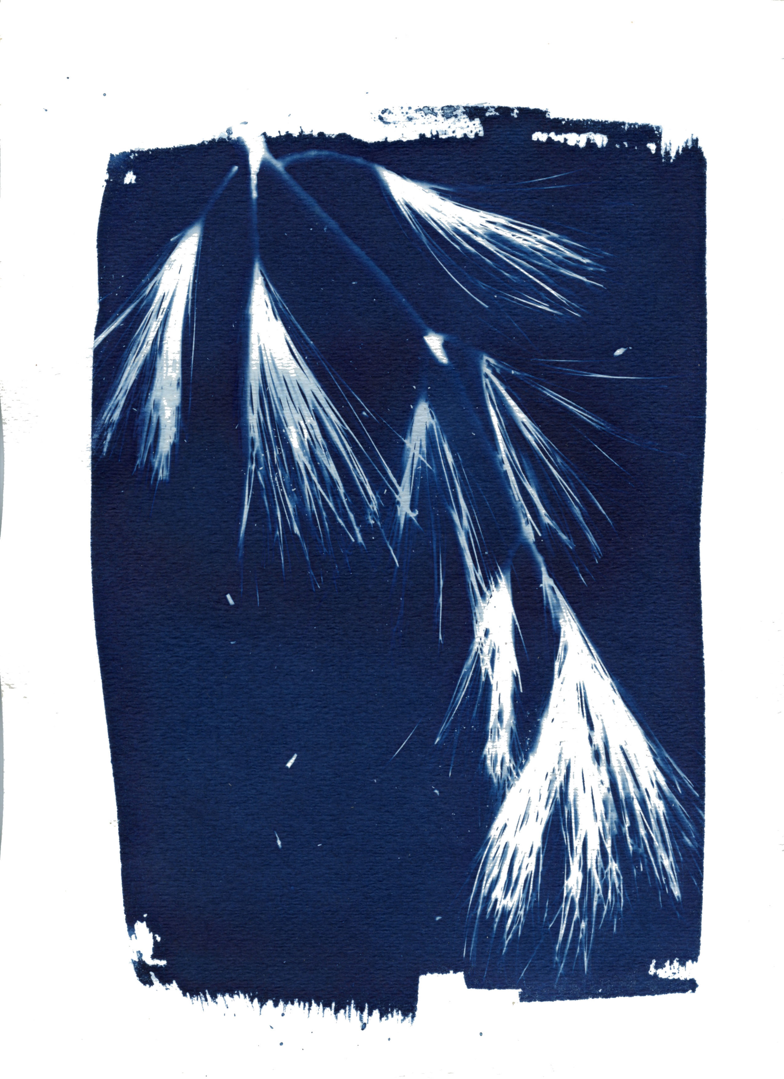 Vermont 2017 Cyanotype photo-gram printed on watercolor paper
